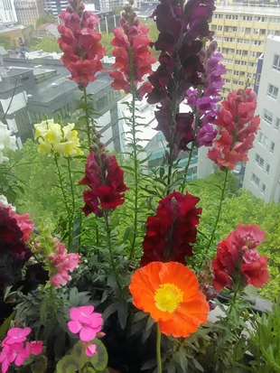 flowers growing on my balcony